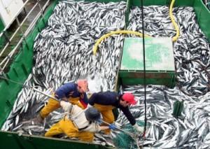 sobreexplotacion-pesquera