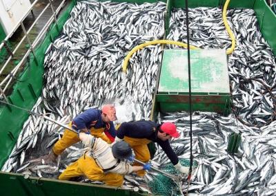 Contents ¿Sabe cuántas toneladas de merluza tira al mar cada uno de estos barcos de 40 o 50 metros de eslora? 10 toneladas diarias; 10.000 kilos, sólo de merluza (no […]